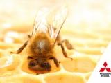 Mitsubishi Motors zet zich in voor de bijen – én de bloemen