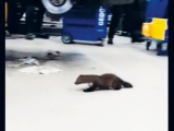 Onverwacht bezoek in de werkplaats bij Terwolde Renault!