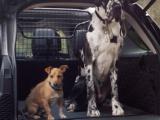 LAND ROVER presenteert speciale reclamecampagne voor honden